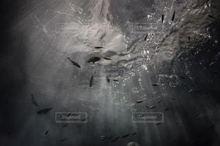 雨の中を飛んでいる鳥の写真・画像素材[713317]