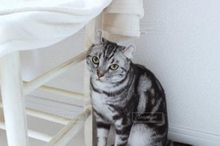 猫 - No.468890