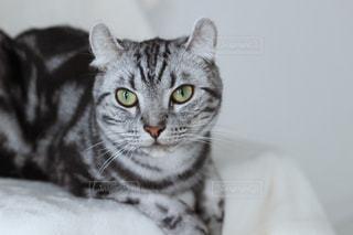猫の写真・画像素材[468892]