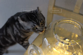 猫の写真・画像素材[476260]
