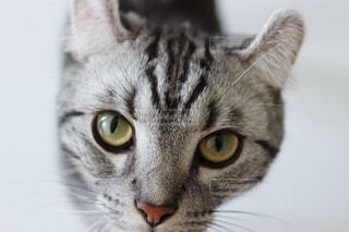 猫の写真・画像素材[492244]