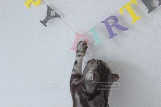 猫の写真・画像素材[496014]