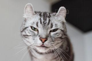 猫の写真・画像素材[499648]