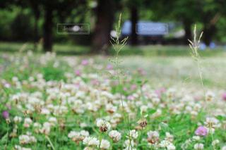 花の写真・画像素材[508679]