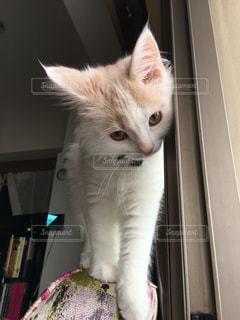 No.468387 猫