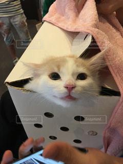猫 - No.471492
