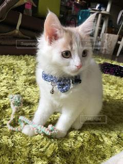 猫 - No.471530