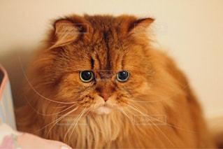 猫 - No.474580