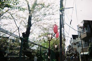 No.481505 桜