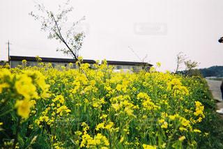 No.481517 花
