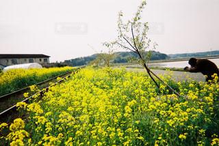 花 - No.481519