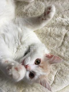 猫 - No.485783
