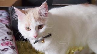 猫の写真・画像素材[561591]
