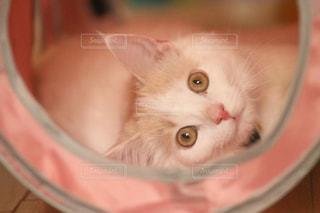 猫 - No.561597