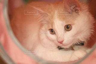 猫 - No.561598