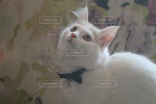 猫 - No.561599