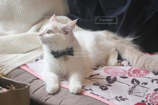 猫 - No.561632