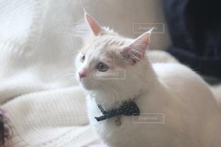 No.561664 猫