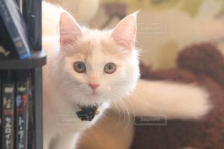猫 - No.561666