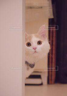 白い面の上に座って猫 - No.742875