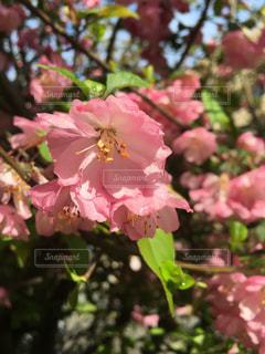 花の写真・画像素材[468361]