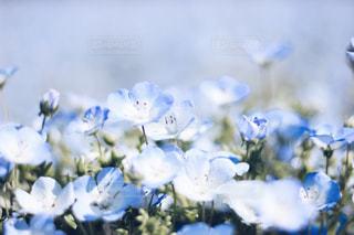 花の写真・画像素材[470183]