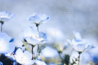 花の写真・画像素材[470188]