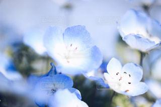 花の写真・画像素材[470193]