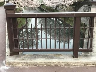 伏見であい橋、桜。の写真・画像素材[1139762]