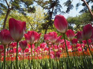 花の写真・画像素材[468718]