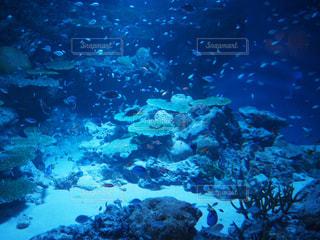 海の写真・画像素材[472691]
