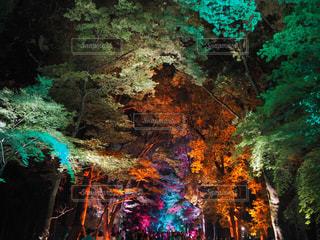 夜景の写真・画像素材[472692]