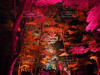 夜景の写真・画像素材[472693]