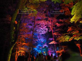夜景の写真・画像素材[472696]
