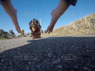 犬 - No.468953