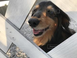 犬 - No.595531