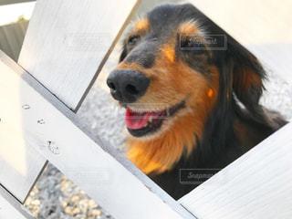 犬の写真・画像素材[633098]