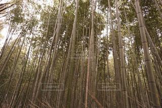 風景 - No.468807