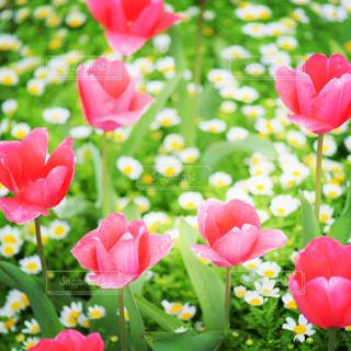 花の写真・画像素材[470827]