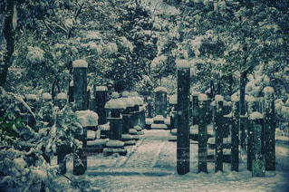冬の写真・画像素材[470831]