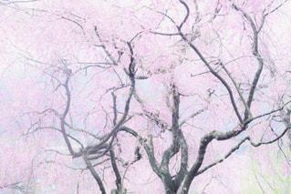 自然の写真・画像素材[471453]