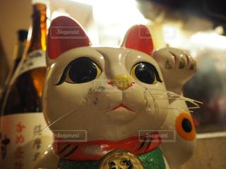 猫の写真・画像素材[469408]