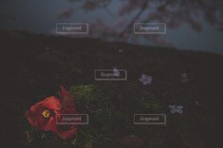 自然の写真・画像素材[472224]