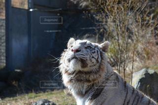動物の写真・画像素材[469128]