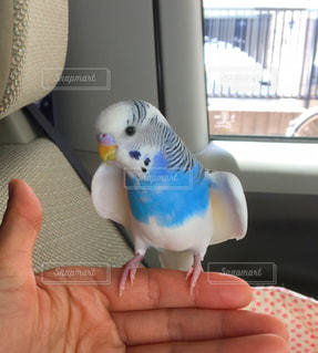 鳥の写真・画像素材[469142]