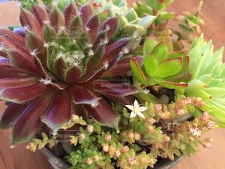 植物の写真・画像素材[470335]