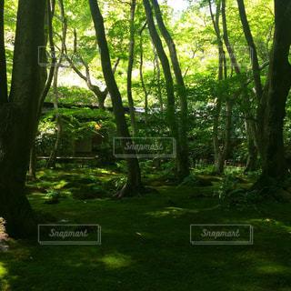 庭の写真・画像素材[551831]
