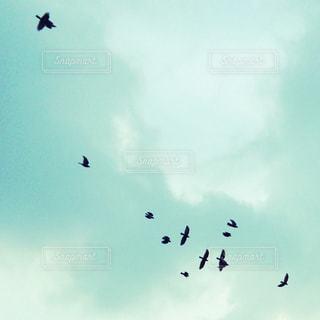 鳥 - No.473091