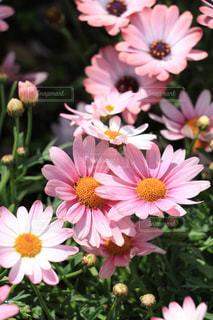 花の写真・画像素材[469738]