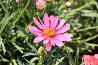 花の写真・画像素材[469763]